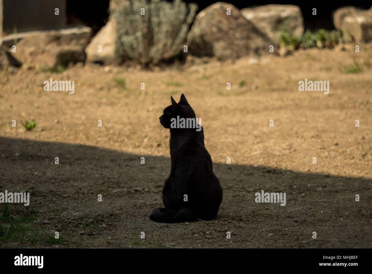 A dark brown cat is sitting in the garden Stock Photo