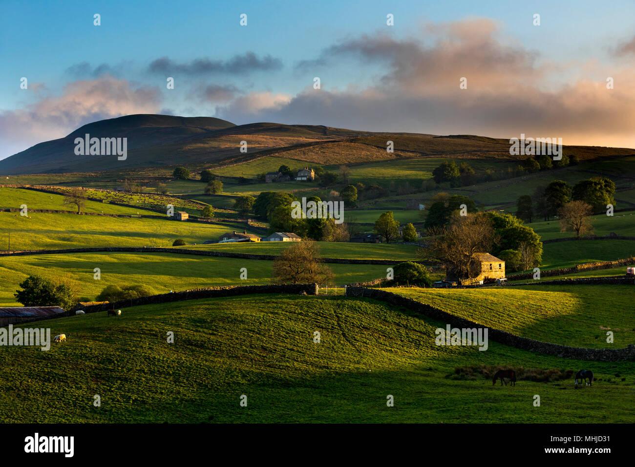 Widdale Fell; Barns; Hawes; Yorkshire; UK - Stock Image