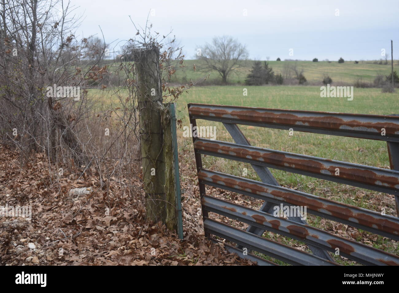 Rusty metal gate opening to pasture land on a cattle farm in rural ...