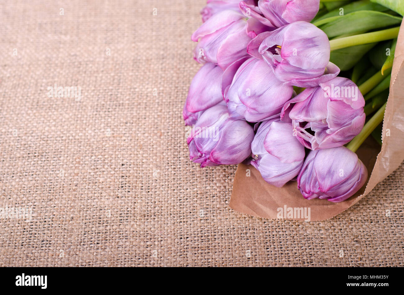 violet tulips on a canvas background for mothers day wedding