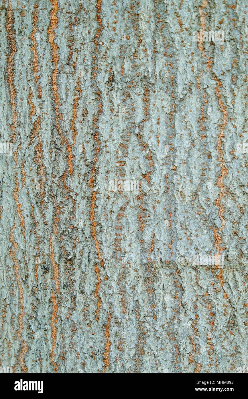 Multicolored Eucalyptus Tree Bark Stock Photos & Multicolored ...