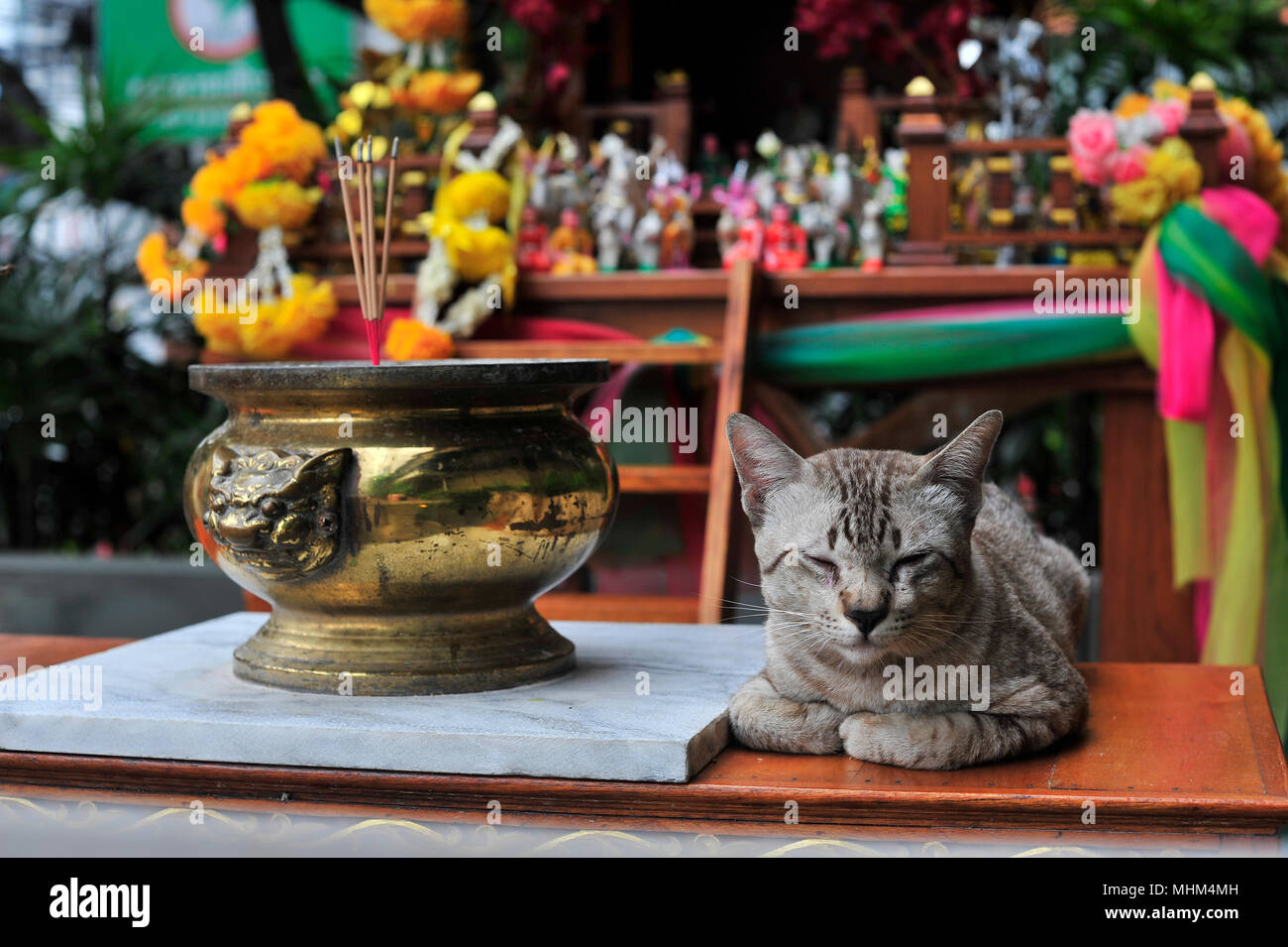 Buddhist Imagery with Grey Cat Pattaya Thailand - Stock Image