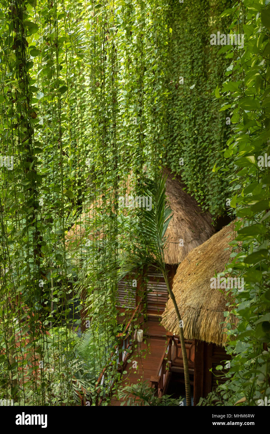 Secluded bungalows amidst the jungle. These isolated wooden huts are perfect for a romantic getaway. They are located in the middle of the jungle. - Stock Image