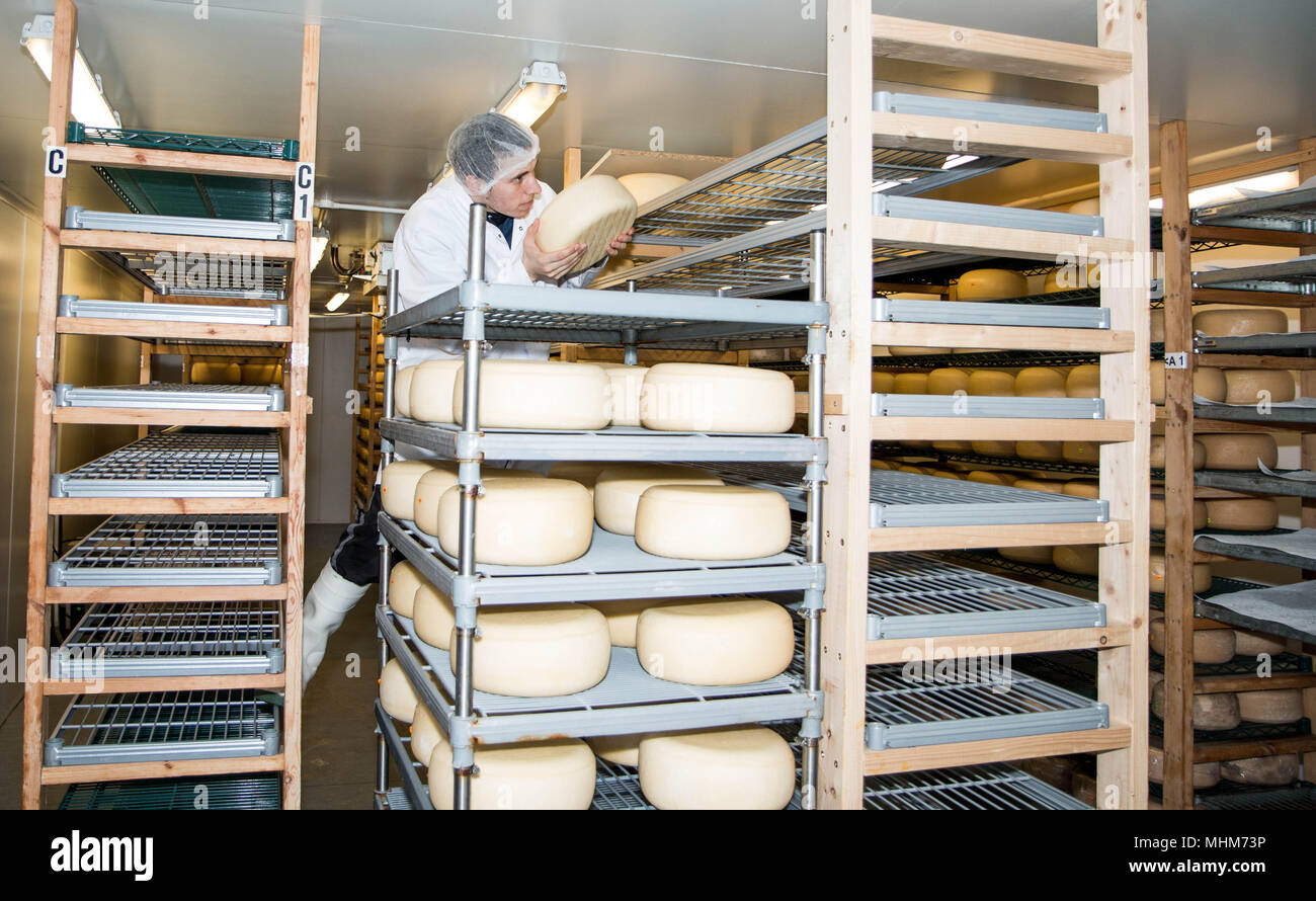 Lyburn cheese - Hampshire Artisan food - Stock Image