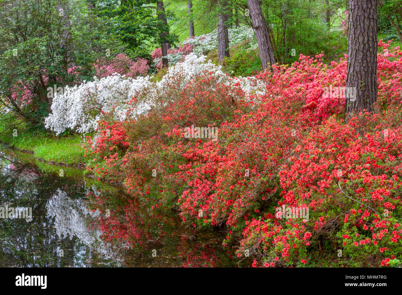 Georgia Hybrid Stock Photos & Georgia Hybrid Stock Images - Alamy