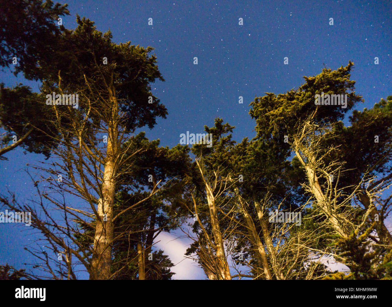 The stars in the forest - Stock Image