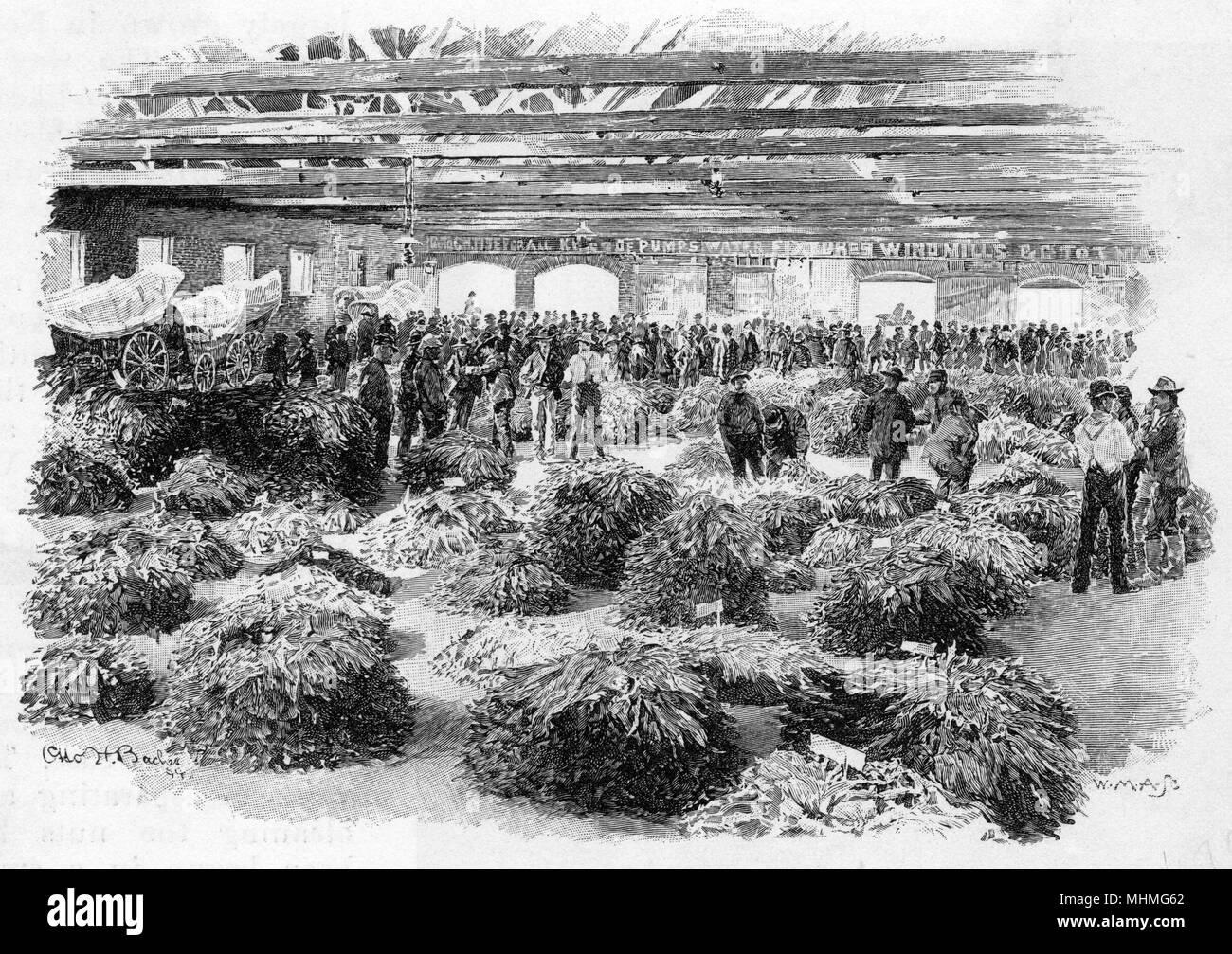 North Carolina, USA : tobacco market selling tobacco leaves     Date: 1895 - Stock Image