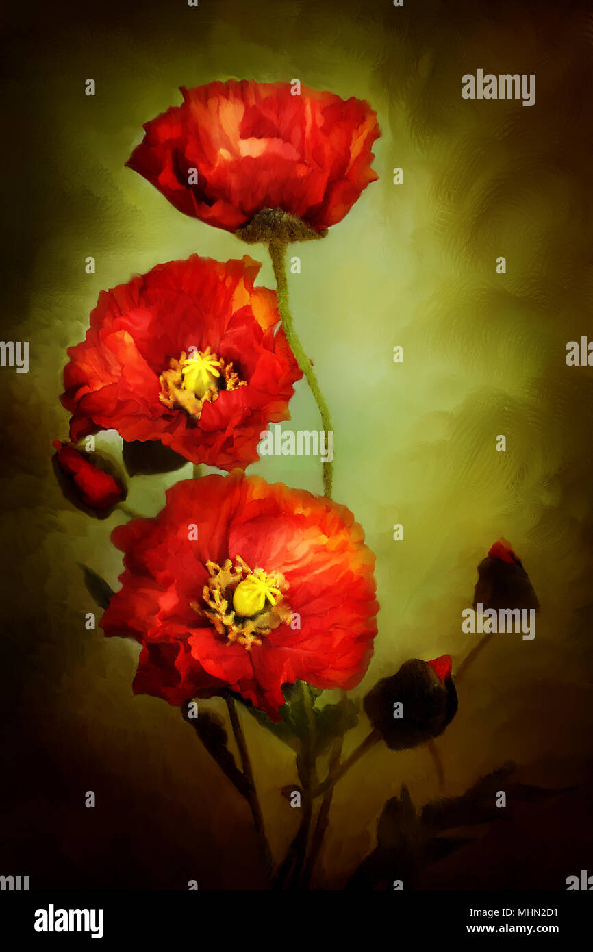 Digital painting of beautiful red poppies. - Stock Image