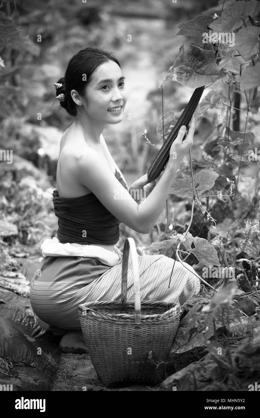 Asia beautiful woman and basket  harvesting containing zucchini, chiangrai Thailand, vintage style, add grain - Stock Image