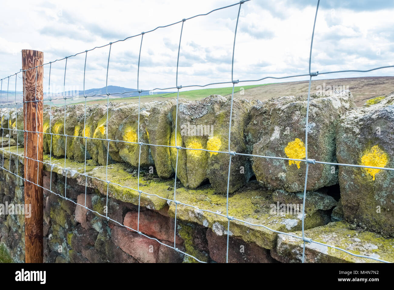 Drystone wall with painted coping stones to deter theft, Peak District - Stock Image