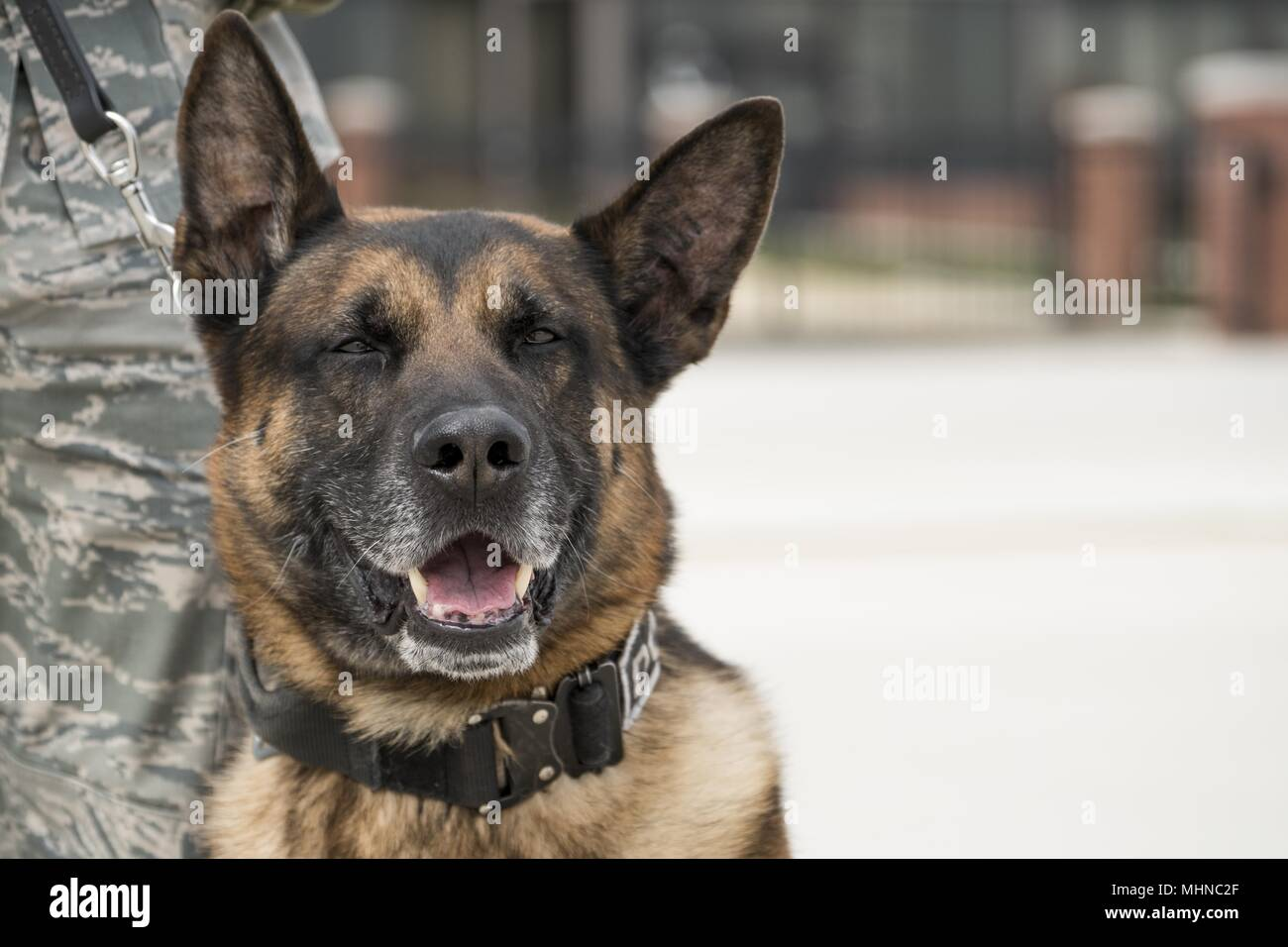 Gip, a military working dog assigned to the 11th Security Support Squadron, stands by his handler, Staff Sgt. Joshua Lawson, as they await the arrival of the President and First Lady of the United States at Joint Base Andrews, Md. March 19, 2018, March 19, 2018. MWDs work as force multipliers when providing security, using their senses to acknowledge handlers of both visible and invisible threats. (U.S. Air Force photo/Tech. Sgt. Robert Cloys). () - Stock Image