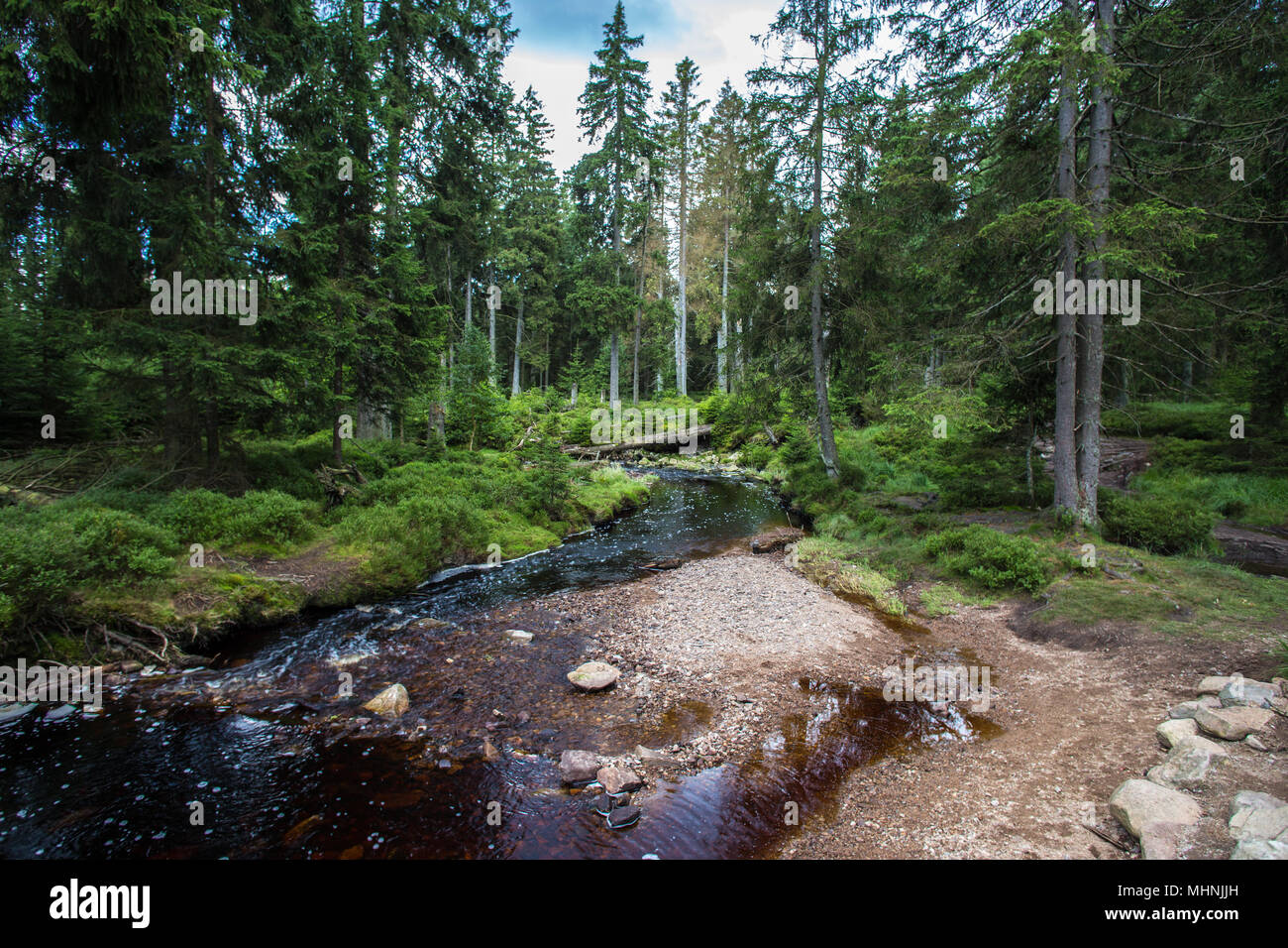 Water stream spring in green Harz mountain forest glade with coniferous trees at cloudy day in summer season - Stock Image