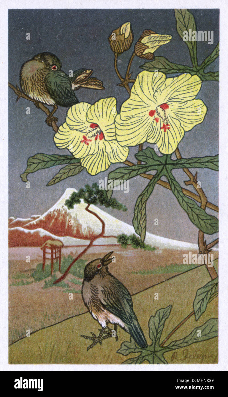 Swiss-published Japanese woodcut-style image - nature theme - Two songbirds in a blossom tree.     Date: circa 1920s - Stock Image