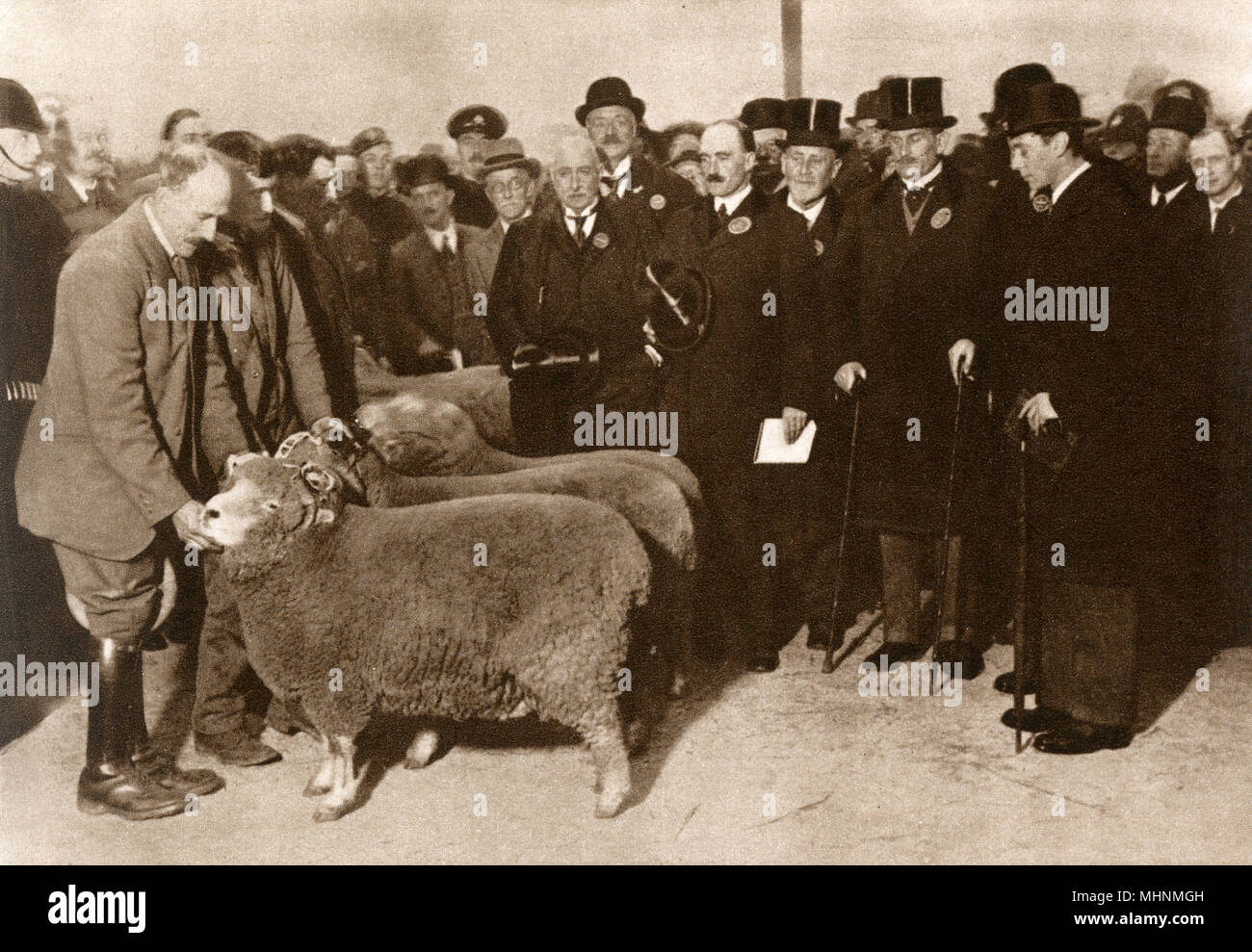 Duke of York at Smithfield Club Fat Stock Show held at the Agricultural Hall Islington in December 1927. His Father (King George V) and his brother (Edward, Prince of Wales) were both exhibiting at the same show).     Date: 1927 - Stock Image