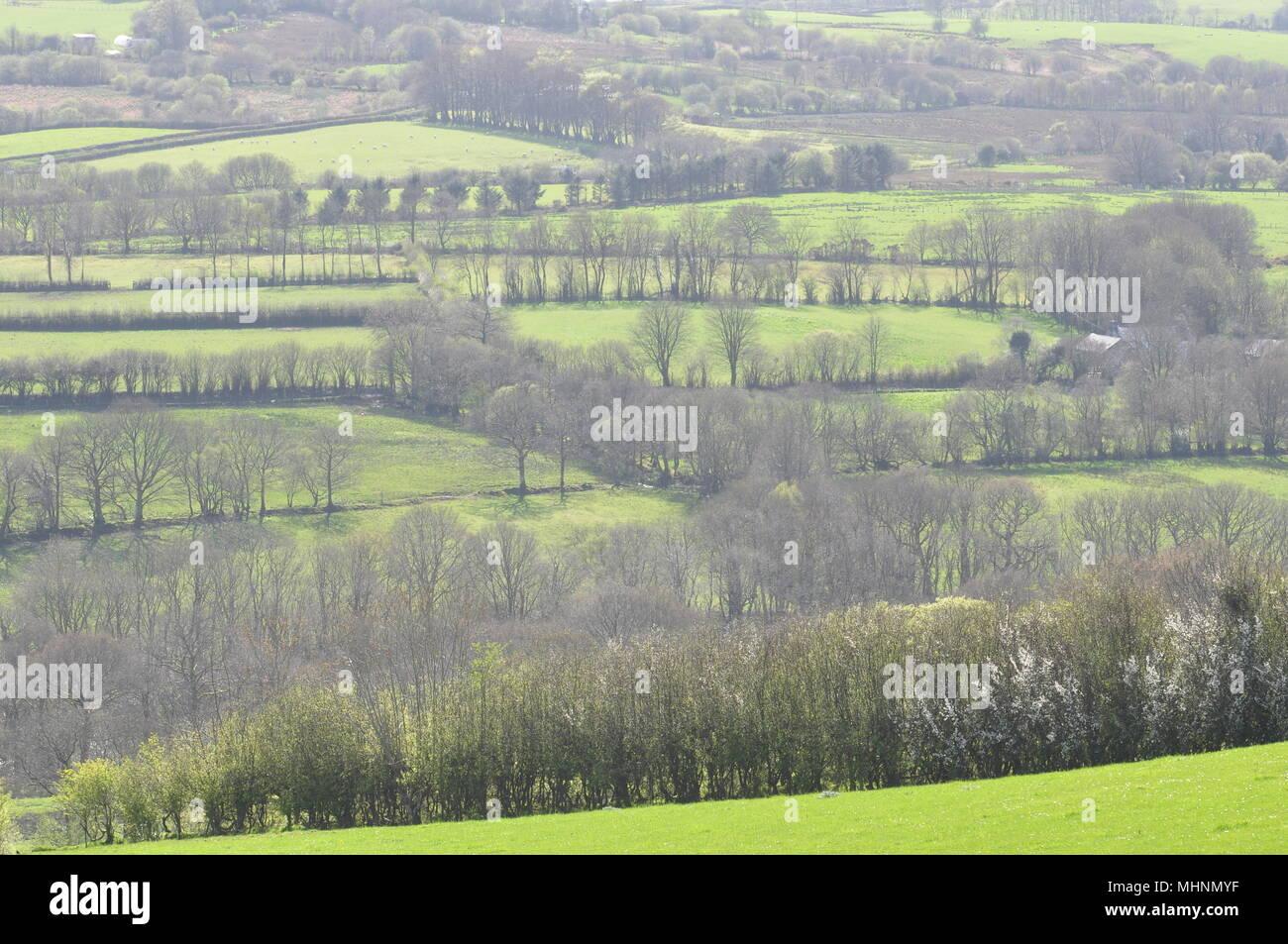 Hedge tree patterns near Blaenpennal Cardiganshire, Wales, UK - Stock Image