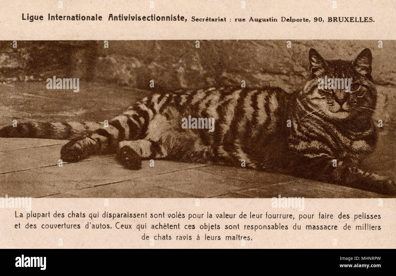 Belgian card produced for the International Anti-Vivisection League ...