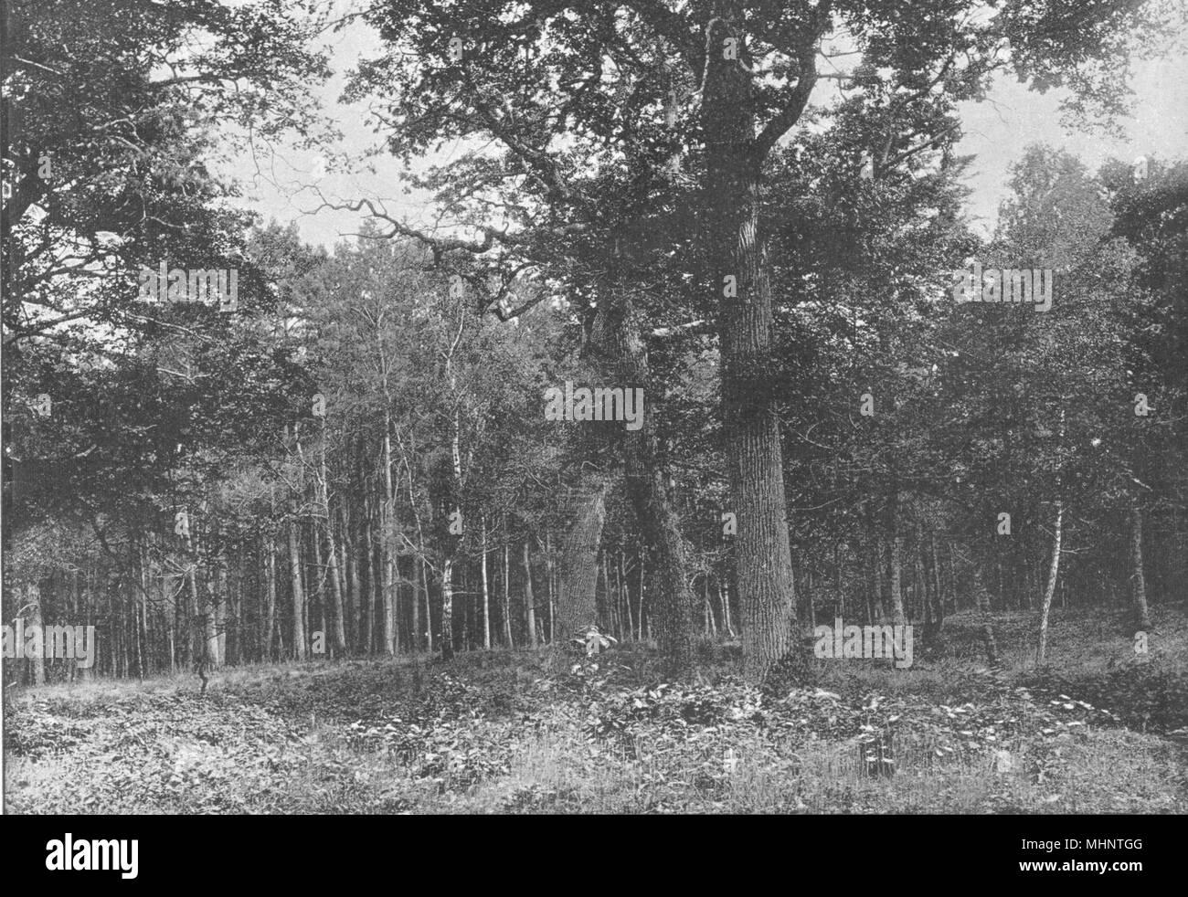 SEINE- ET- MARNE. Forêt de Fontainebleau. Sentier des Artistes 1895 old print - Stock Image
