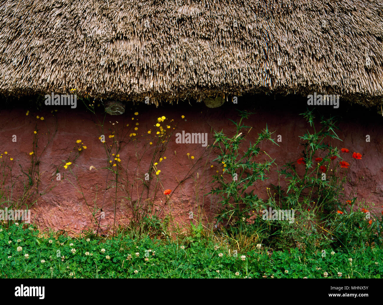 Detail of the outside of the the Moel y Gerddi house at Butser Ancient Farm, Hampshire, UK; the wattle and daub wall, protected by the eaves of the th - Stock Image