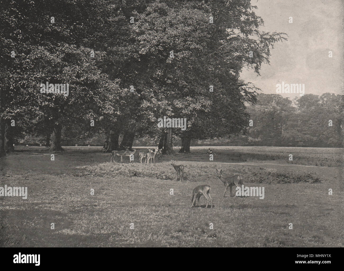 Richmond Park London 1896 Old Antique Vintage Print Picture Stock Photo Alamy