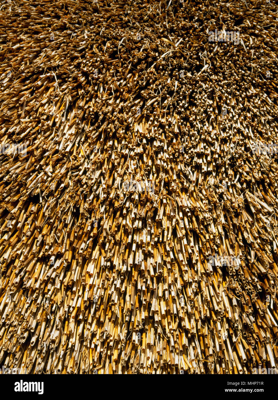 Detail of thatched roof of the reconstructed Longbridge Deverel House (Great Roundhouse) at Butser Ancient Farm, Hampshire, UK; wheat straw. - Stock Image