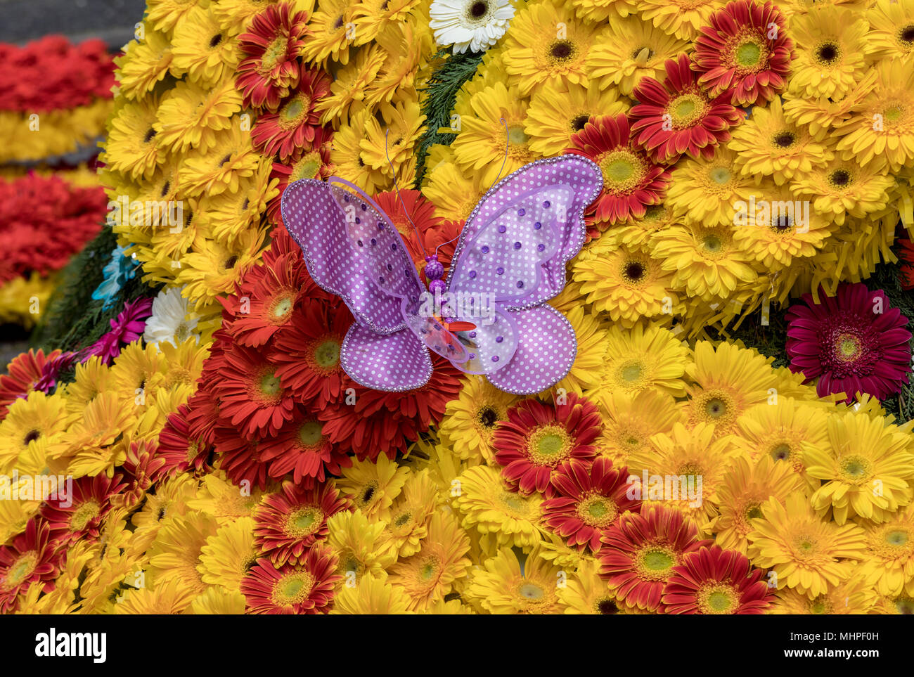 Flowers decoration at the Madeira Flower Festival. Madeira Islands, Portugal - Stock Image