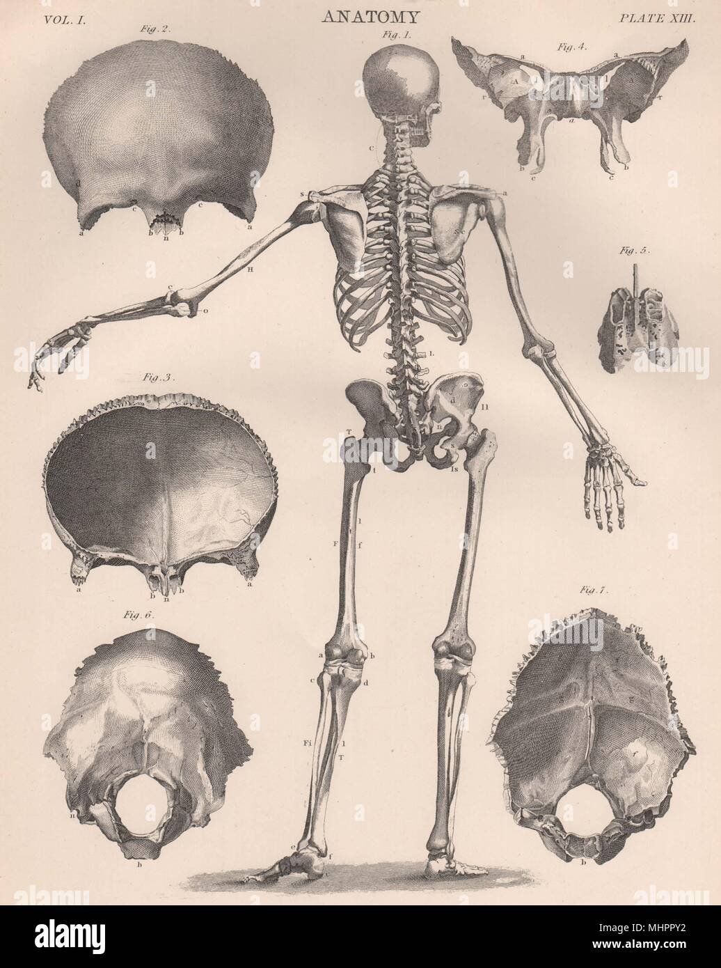 Human Skeleton From Behind Anatomy Skull Britannica 1898 Old