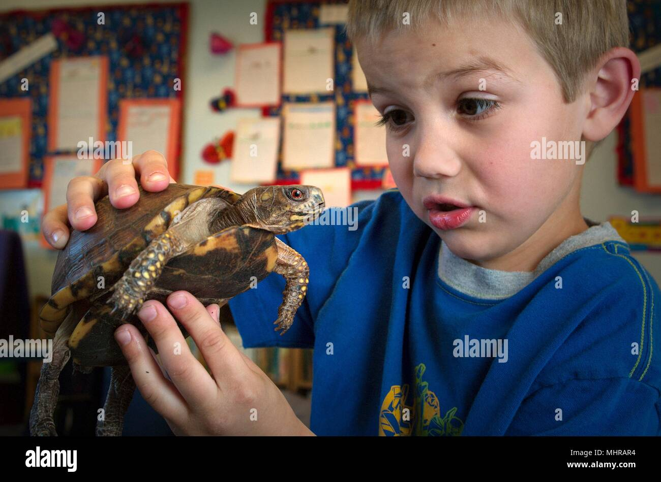 Young boy playing with a box turtle, a potential carrier of the Salmonella virus, 2005. Image courtesy Centers for Disease Control (CDC) / James Gathany. () - Stock Image