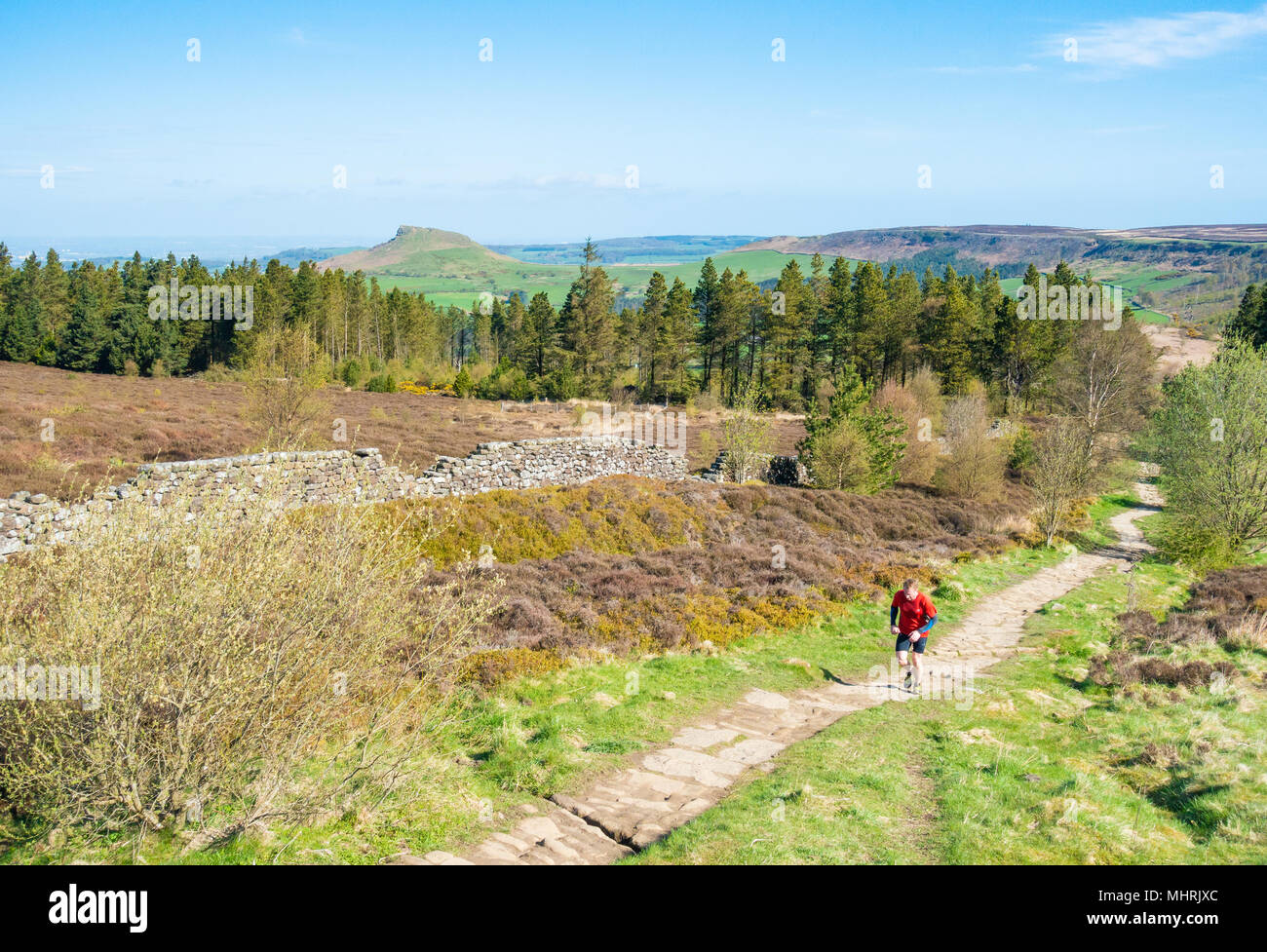 Easby Moor, North York Moors National Park North Yorkshire, England, UK. 3rd May, 2018. Weather: Glorious sunshine in North Yorkshire.  Runner heading up to Captain Cook`s monument on Easby Moor, with Roseberry Topping in distance (also dubbed the Yorkshire Matterhorn due to its similar shape). 2018 marks the 250th anniversary of Captain Cook`s first Pacific voyage, with events planned nationwide to commemorate the event. Credit: ALAN DAWSON/Alamy Live News - Stock Image
