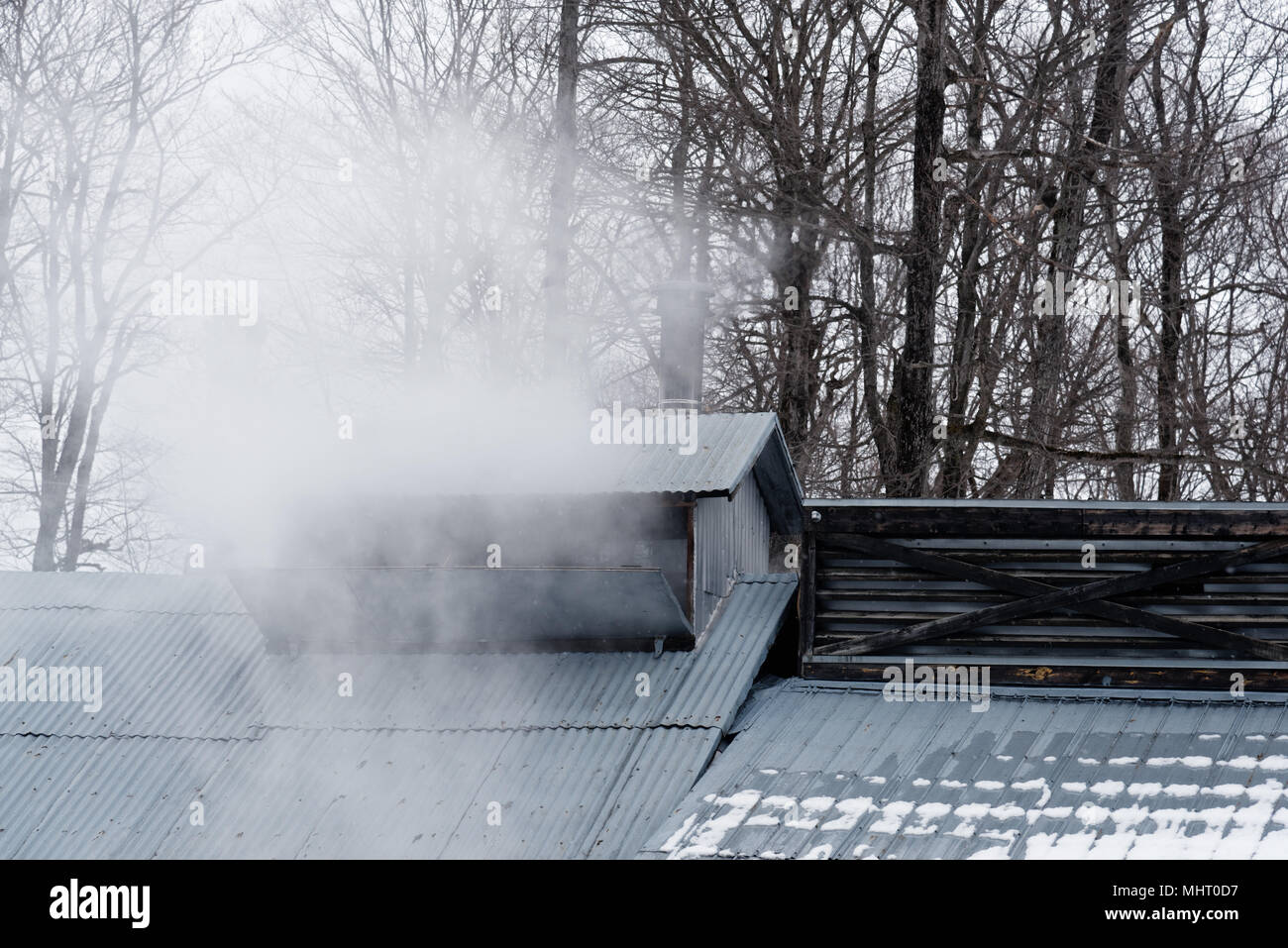 Steam from maple syrup production rising from a vent in the roof of a sugar shack in Quebec, Canada - Stock Image