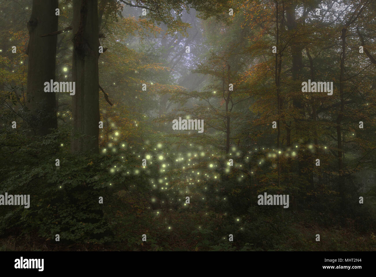 Stunning fantasy style landscape image of fireflies glowing in night time forest scene - Stock Image