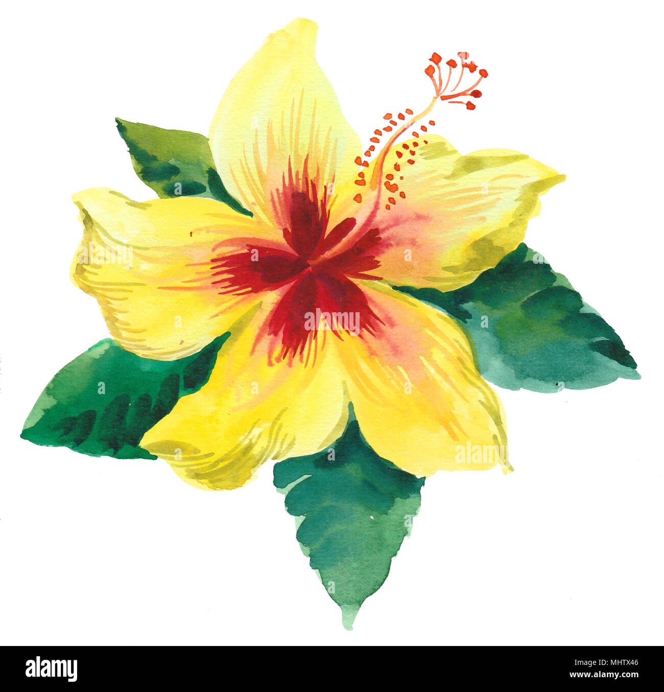 Yellow Hibiscus Flower Watercolor Painting Stock Photo 183100182
