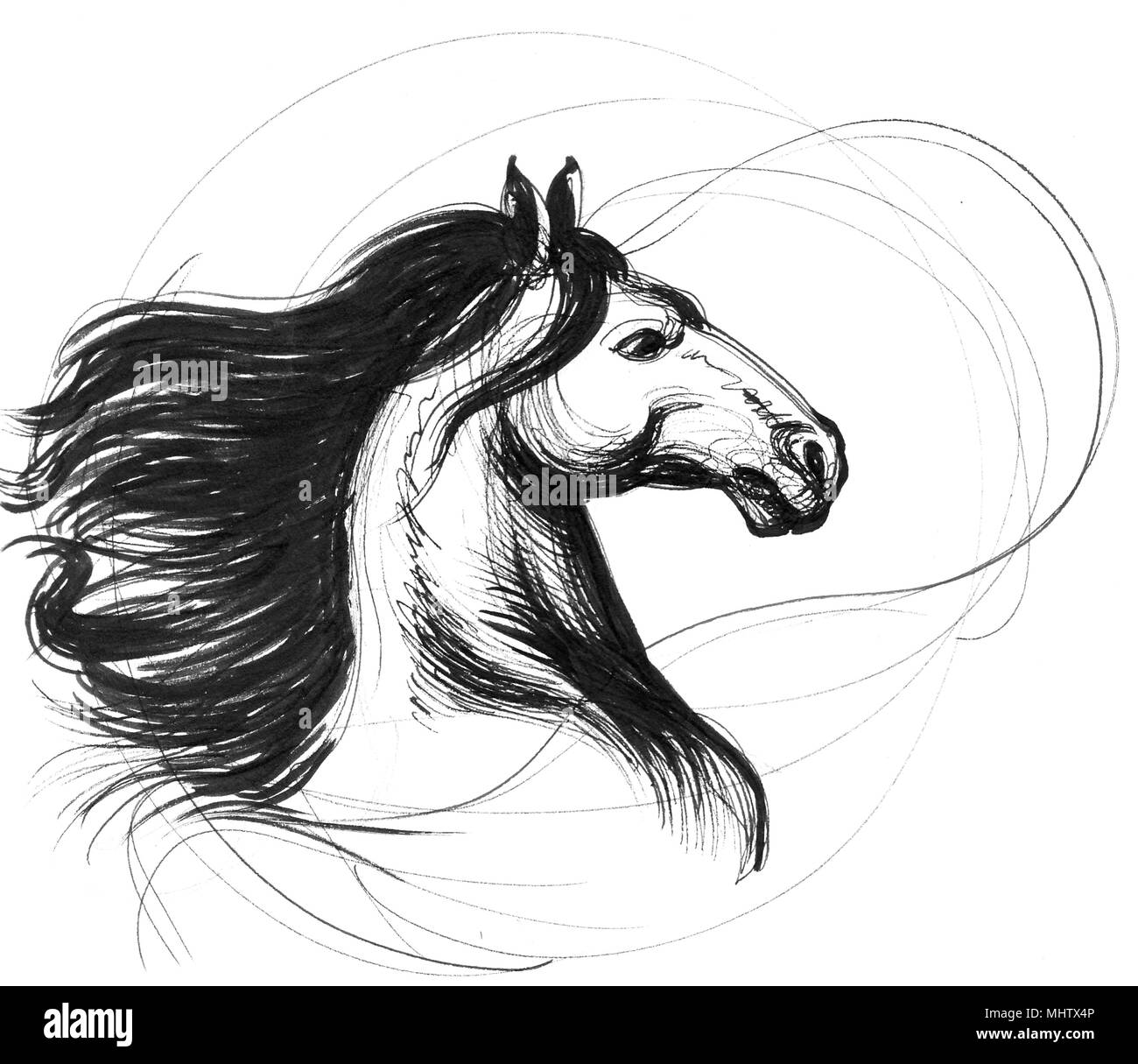 Ink Black And White Line Drawing Of A Horse Head Stock Photo Alamy