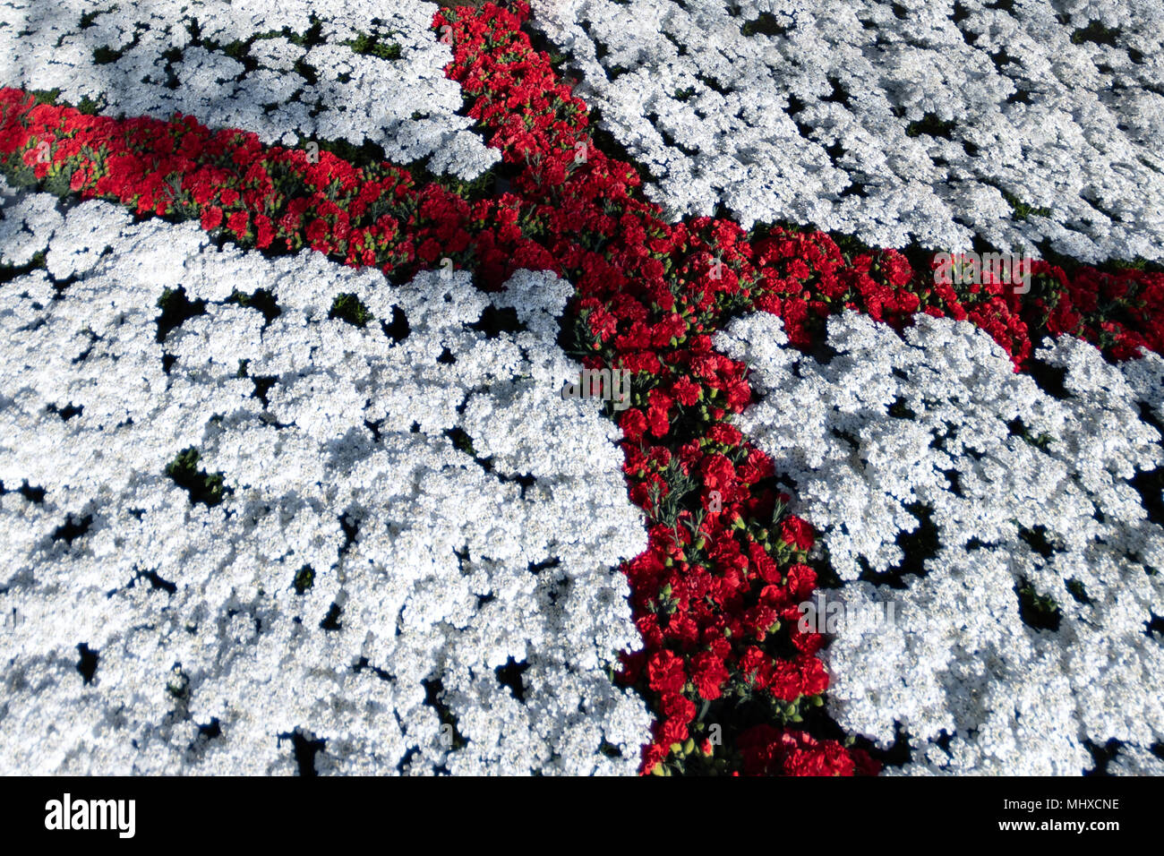 Saint George Flag Red Cross On White Made Of Flowers Detail Stock