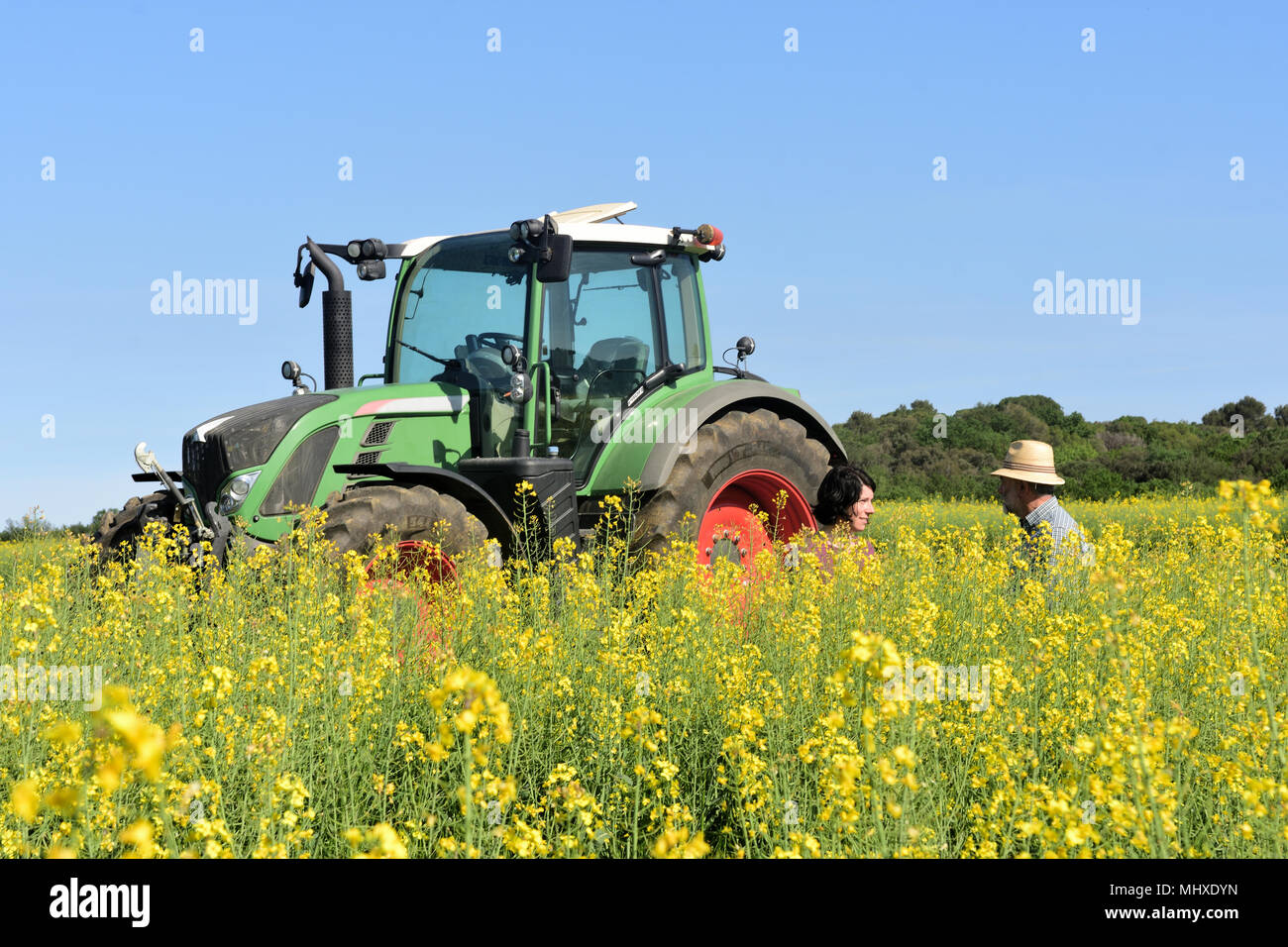 couple of farmers in a canola field with a tractor - Stock Image