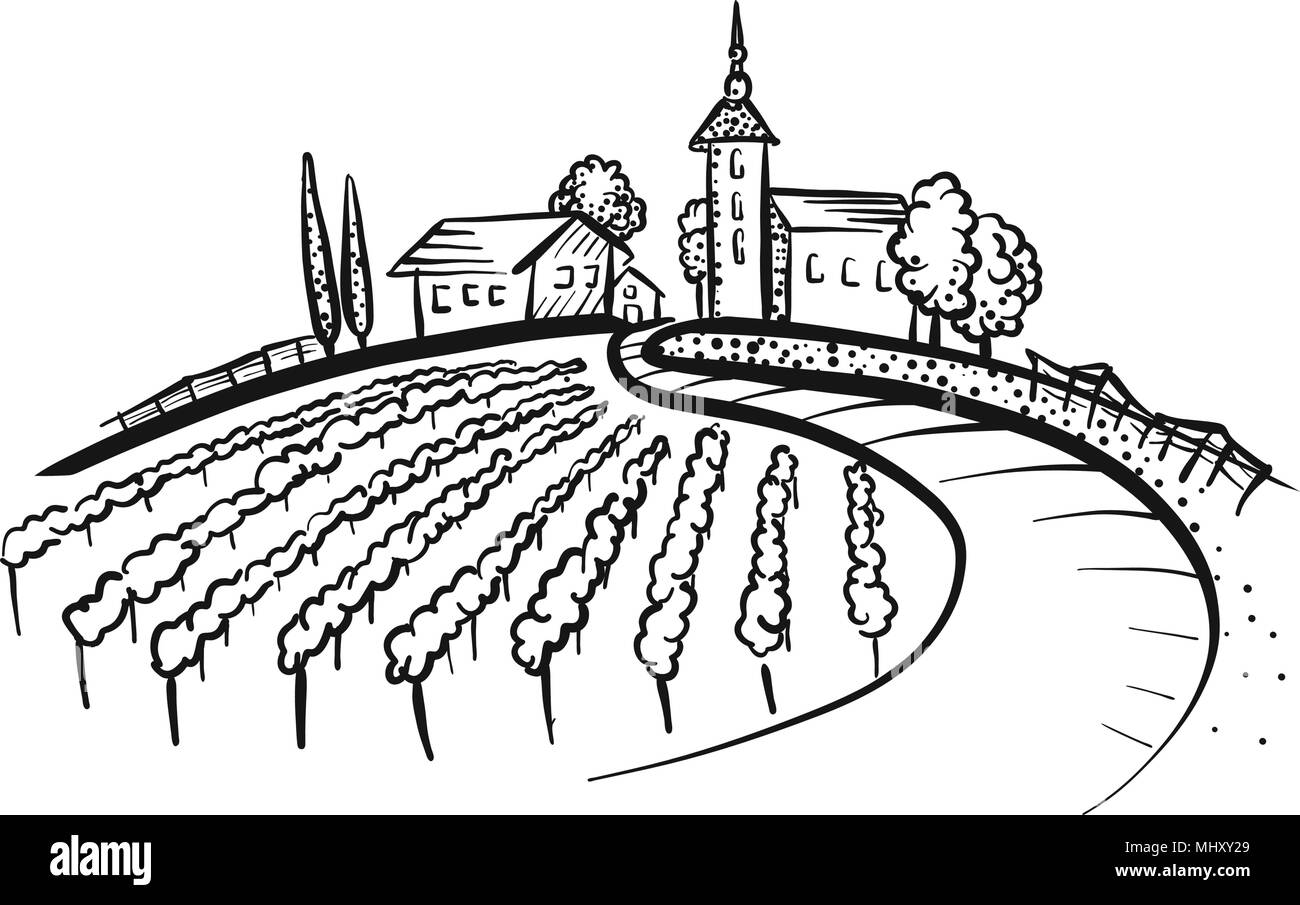 Vineyard Drawing with grapes, path and houses on hill. Hand-drawn vector illustration. - Stock Image