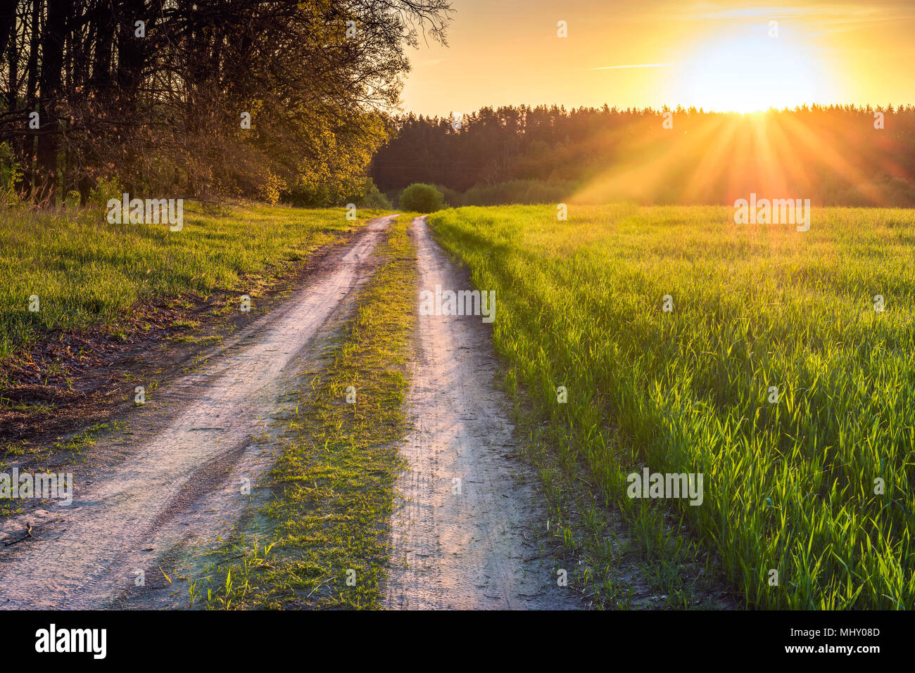 Dawn in the spring wheat field in the Kyiv region, Ukraine. The road is along the May field. - Stock Image
