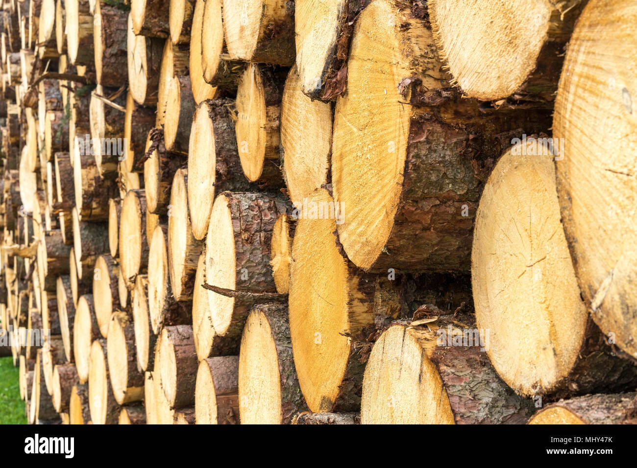 timber harvesting in the bavarian alpes,Germany - Stock Image