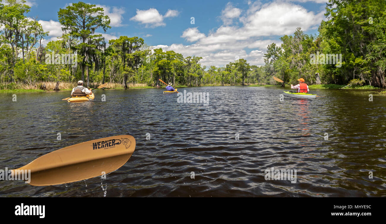 LaPlace, Louisiana - An environmental kayak tour in the  Maurepas Swamp Wildlife Management Area near New Orleans. The tour was organized by Louisiana - Stock Image