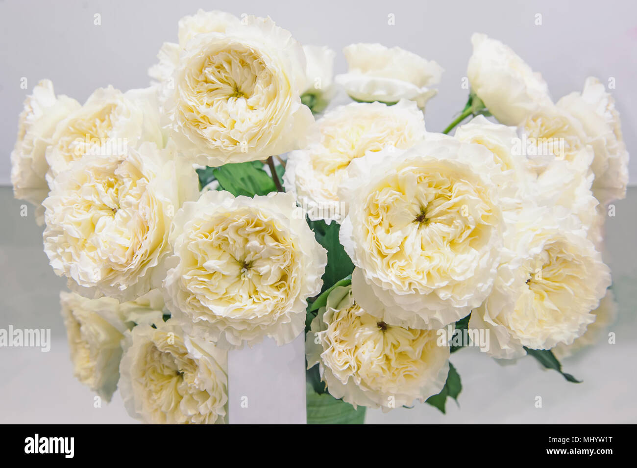 White roses with green middle is an original selection of a large bouquet on sale in the flower market. Modern elite varieties. Stock Photo