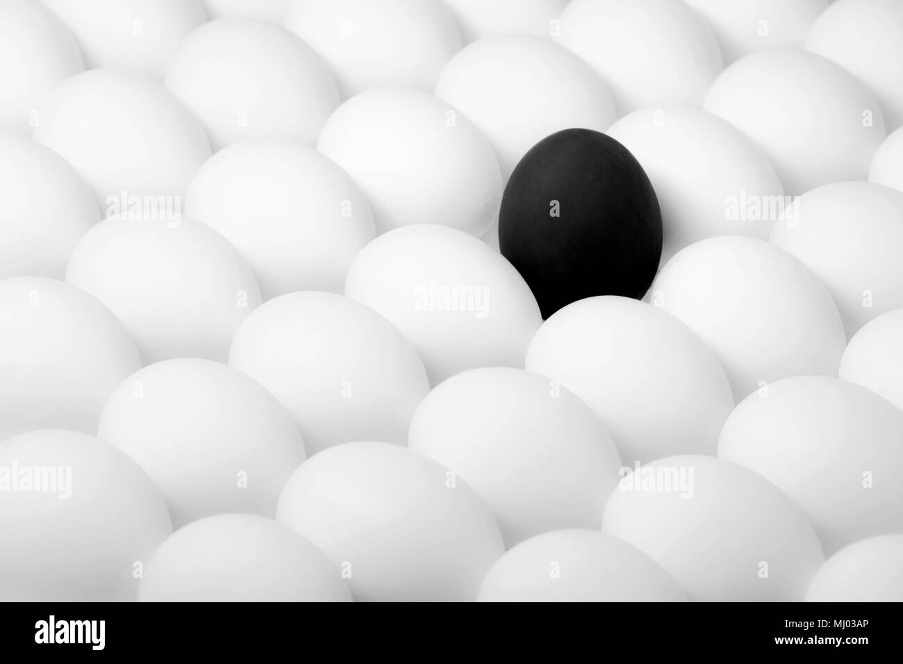 black rebel egg standing out from the crowd of white eggs - Stock Image
