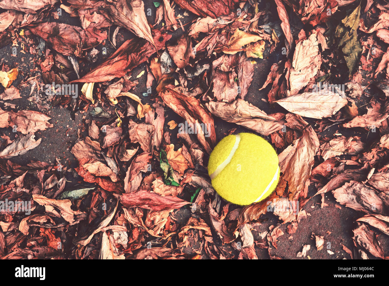 Top Down Vintage View Of An Old Yellow Tennis Ball Surrounded By Dry