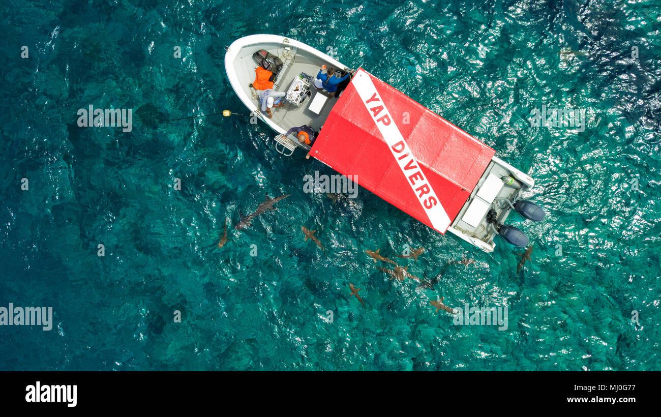 dive boat and sharks, Yap island, Federal States of Micronesa, Australia, Pacific / Yap | Tauchboot und Haiem Föderierte Staaten von Mikronesien, Aust - Stock Image