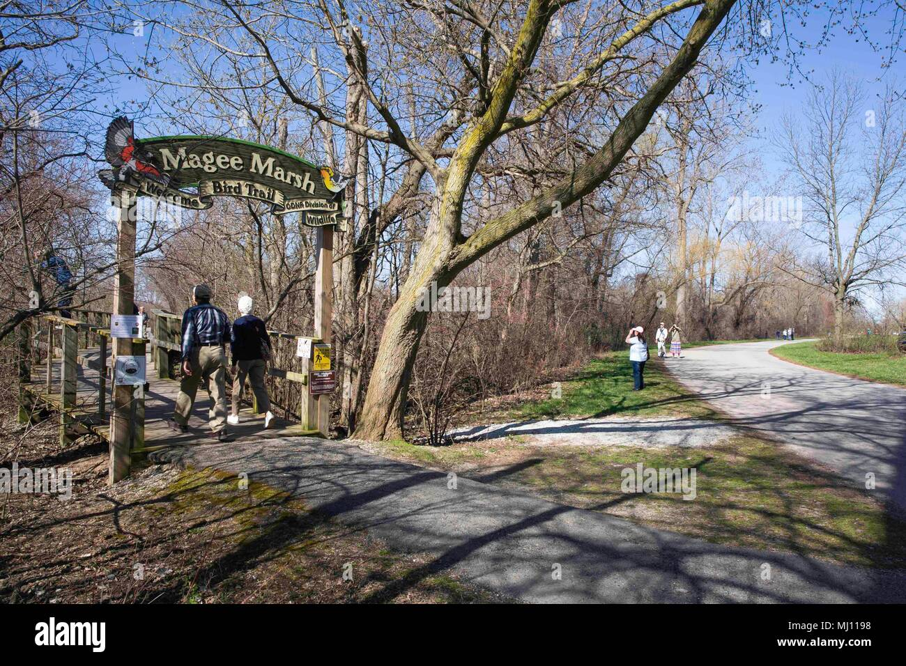 MAGEE MARSH, OAK HARBOR OHIO, May1, 2018: Early birders walking the Magee Marsh boardwalk, 'The Warbler Capital of the World!', in preparation for the - Stock Image