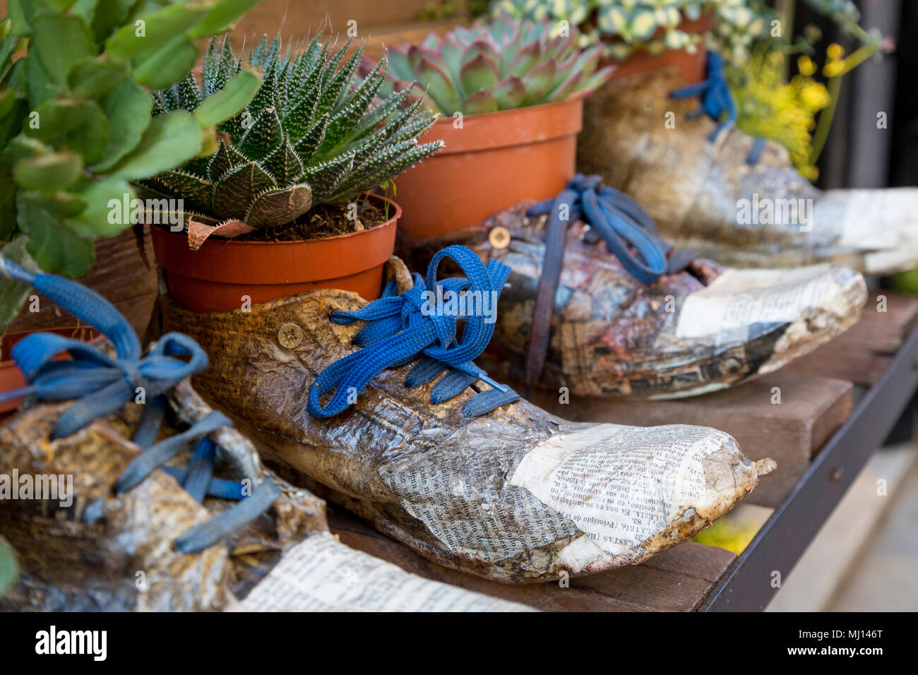 Shoes as planters in a unique display at a shoe store in Montepulciano, Tuscany, Italy - Stock Image