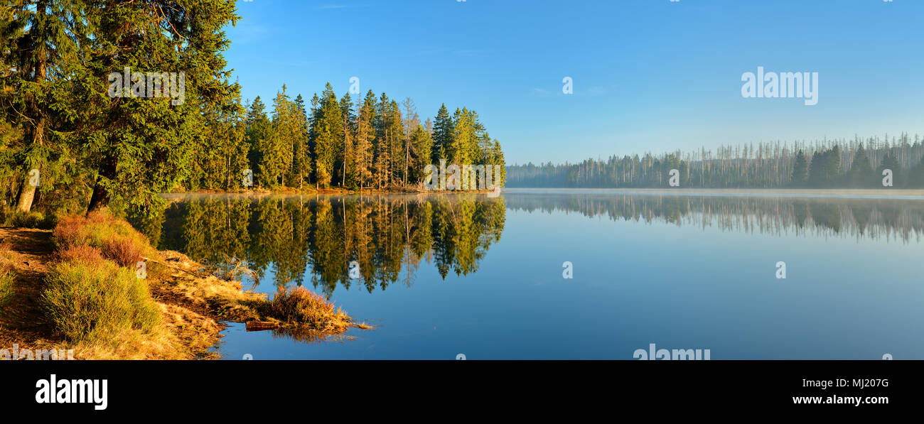Morning atmosphere at the Oder pond, on the shore natural forest, partly dead spruces due to bark beetle infestation - Stock Image