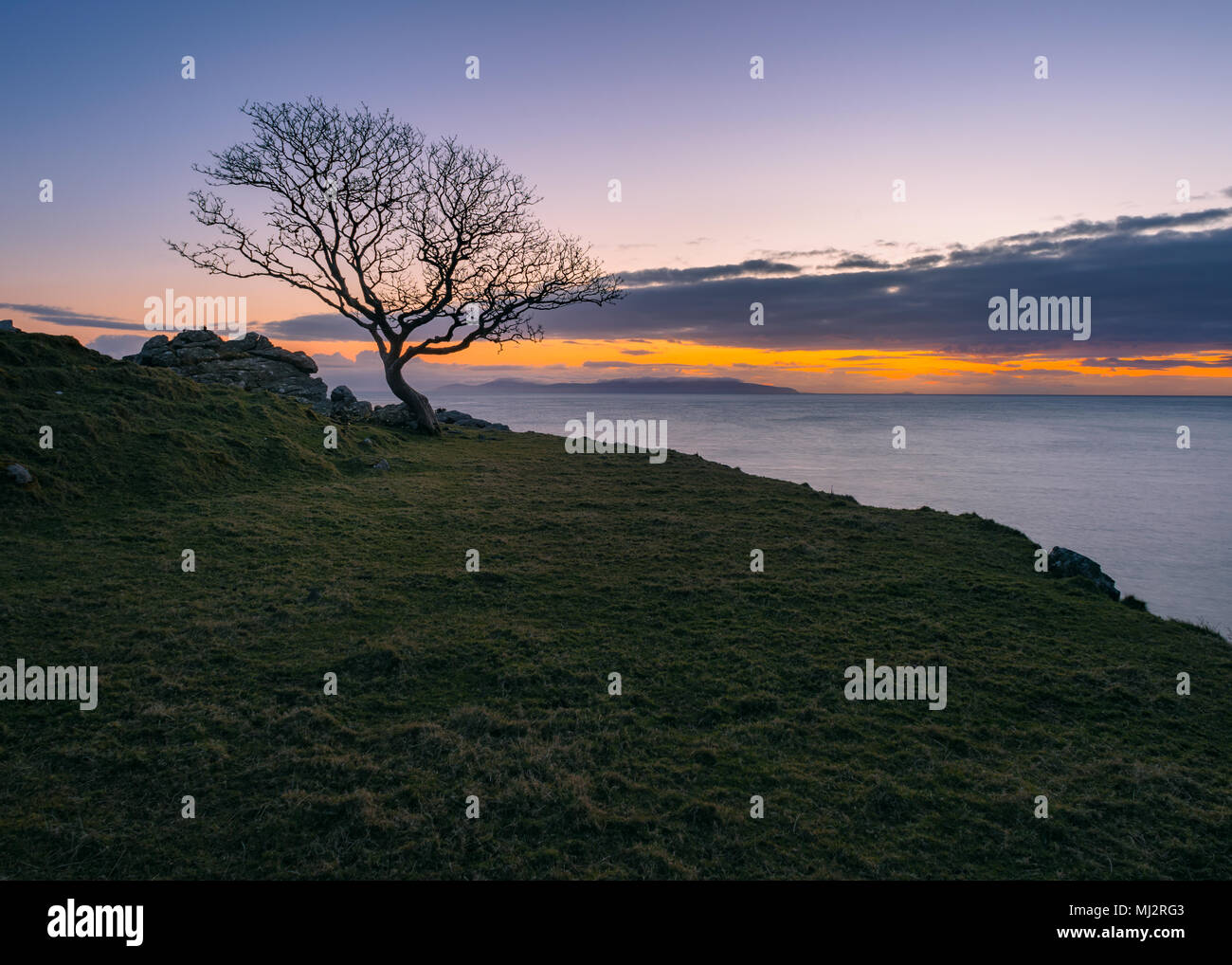 Magical tree in murlough bay in Northern Ireland Stock Photo