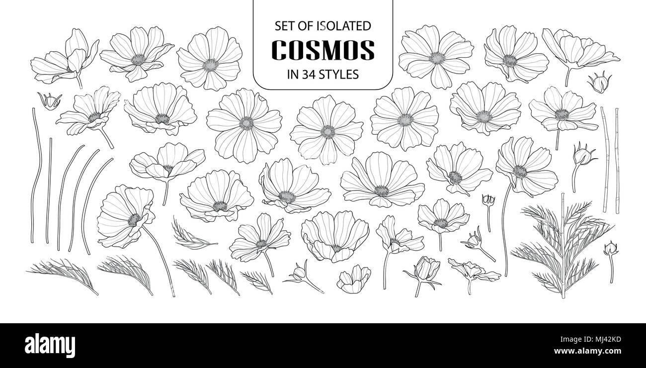 Set of isolated cosmos in 34 styles. Cute hand drawn flower