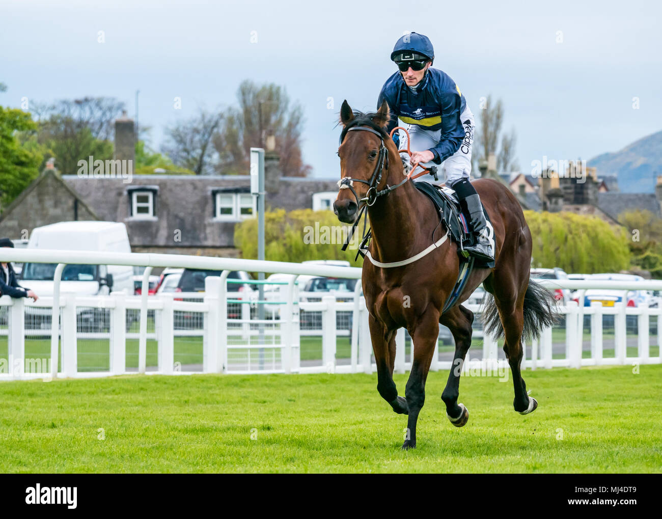 Musselburgh, Scotland, 4 May 2018. Musselburgh Race Course, Musselburgh, East Lothian, Scotland, United Kingdom. A race horse gallops to the start at the afternoon flat horse racing meet. Horse 'Montague' ridden by jockey Daniel Tudhope from Ireland in the 3.40 Weatherbys Bank Foreign Exchange Handicap - Stock Image