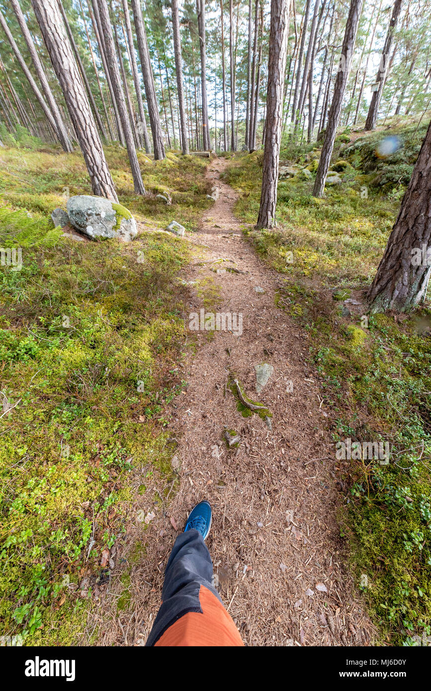 nice trail in a forest made for walking - Stock Image