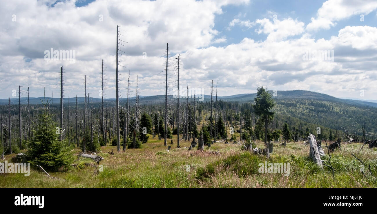 panorama of wild Bayerischer Wald and Sumava mountains with hills, meadows, forest devastated by bark beetle infestation and blue sky with clouds from - Stock Image